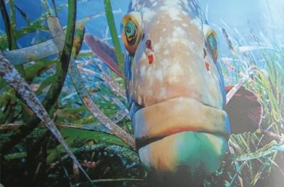 Thalassa : Algérie, la mer retrouvée. Exposition sur les fonds méditerranéens